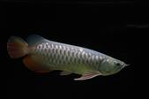 20120728MyFishes