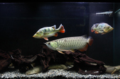 20130228 My Fishes