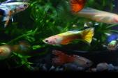 20130525MyFishes