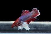 2013 MyFishes