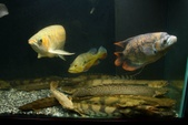 9710 My Fishes