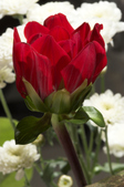 960320 Flowers