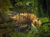LionfishScorpionfishStonefish