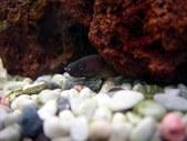 Marine eels