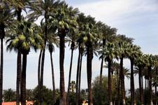 CALIFORNIA DESERT - 2010