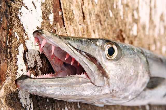 Al Caucci's Andros Island Bonefish 2006