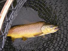 Beaverhead/Bighole/Spring Creeks