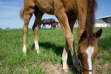 Mares and babies