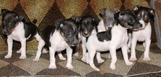 CAL VAL PUPPIES - BETTY / JORGE