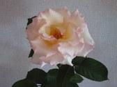 Enlarge photo 23