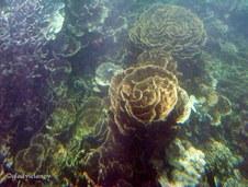 Enlarge photo 72
