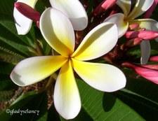 My Flowers 2004