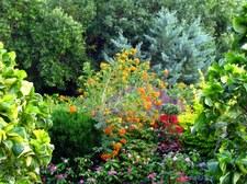 Gardens #1