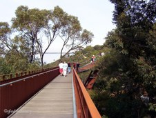 Tree-top Walk in Kings Park