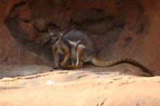 Henry Doorley Zoo