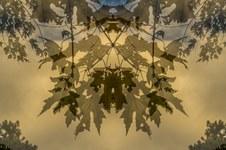 Symmetree Series: Winter