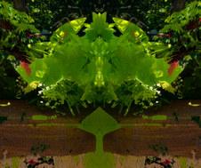 Symmetree Series: Spring