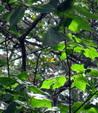 Enlarge photo 60