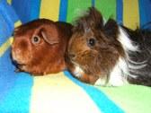 Susan's Pigs