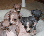 Liberty's Royal Litter