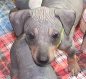 Magic Puppies at 6 Weeks