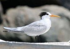 Birdwatching- observacion de aves