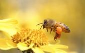 Bee Stuff