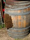 Wine Barrel Hive