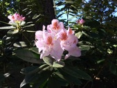 Woodbury Ln; Flora & Fauna