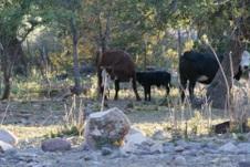 2010 05 26 Mineral Creek Life