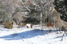 2010 Scenic Photos