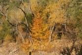 Fall On Mineral Creek