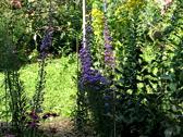 Garden Misc