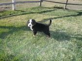 Maxx Oct. 16,2010& dog shots
