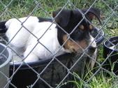 Chigaru & Lola's pups