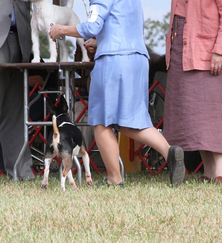 AKC dog show in VA