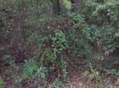 Enlarge photo 20