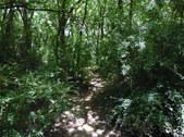 Nature Hike 172