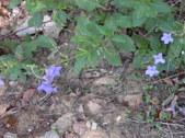 Nature Hike 193