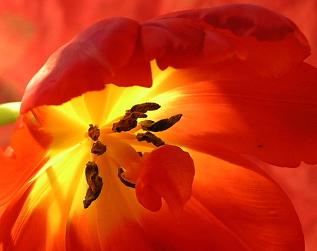 Red and Orange Blossoms