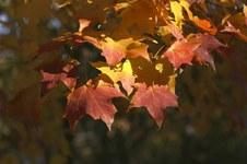 Fall Colors 2006