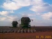 2005 harvest