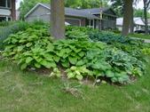 The Yard & Plants